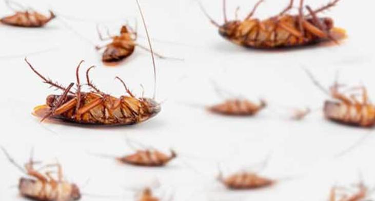 Kakkerlakken in huis, de nachtmerrie van iedereen!